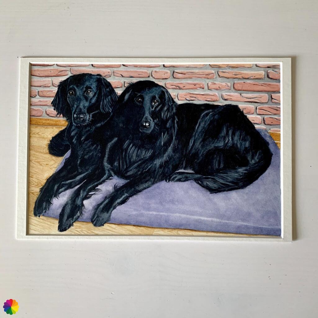 Dog portrait flat coated retrievers
