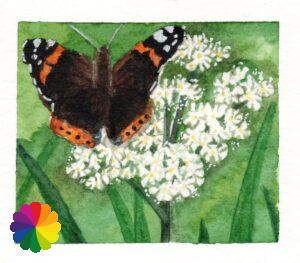 Illustration red admiral butterfly