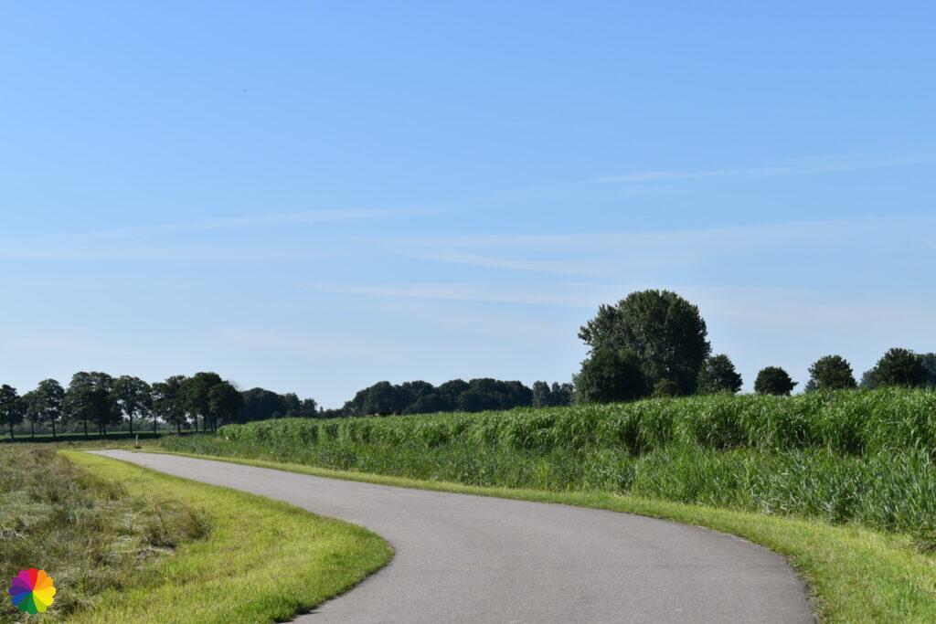 Corn fields at Albrandswaard