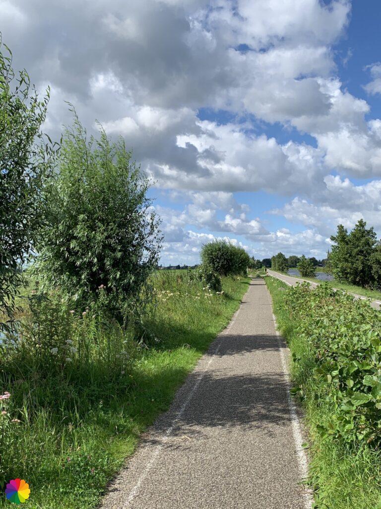 Pollard willows along the Kerkweg, Reeuwijk-Dorp