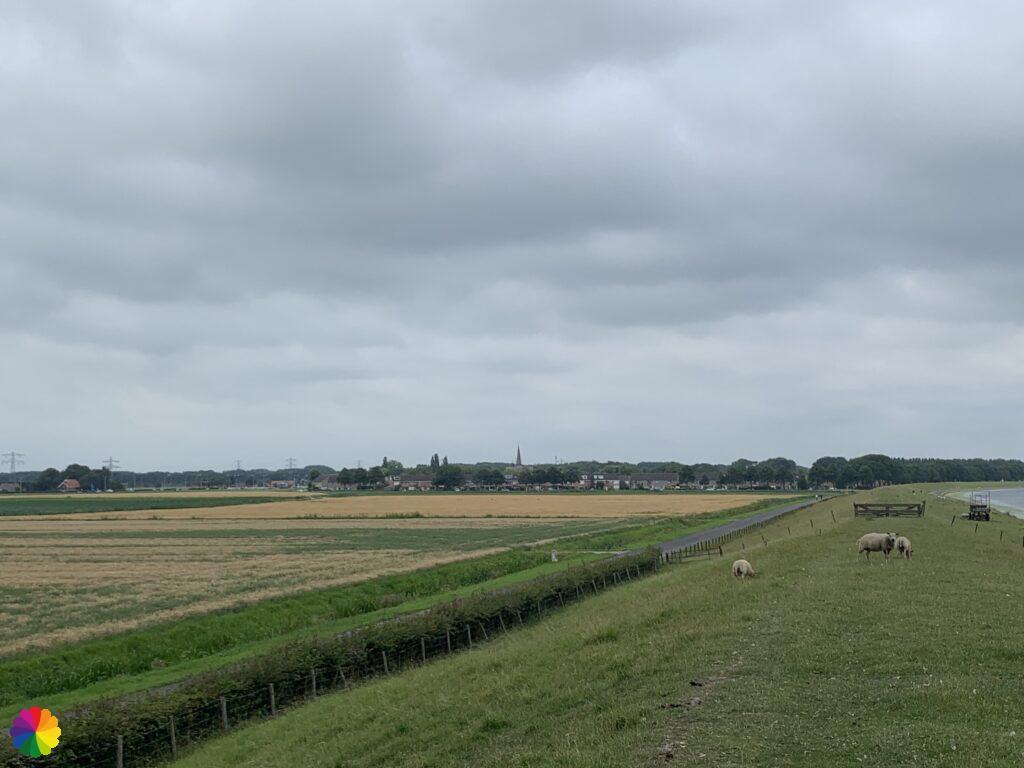 Geervliet in the distance