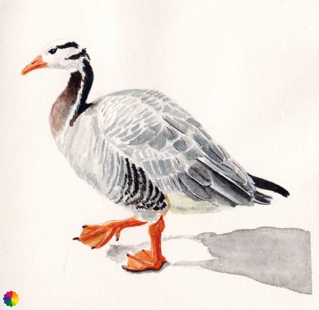 Illustration bar-headed goose