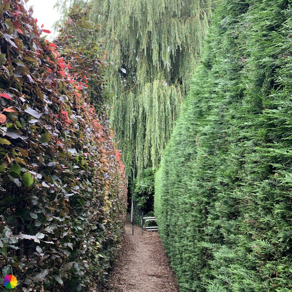 Path goes between two hedges