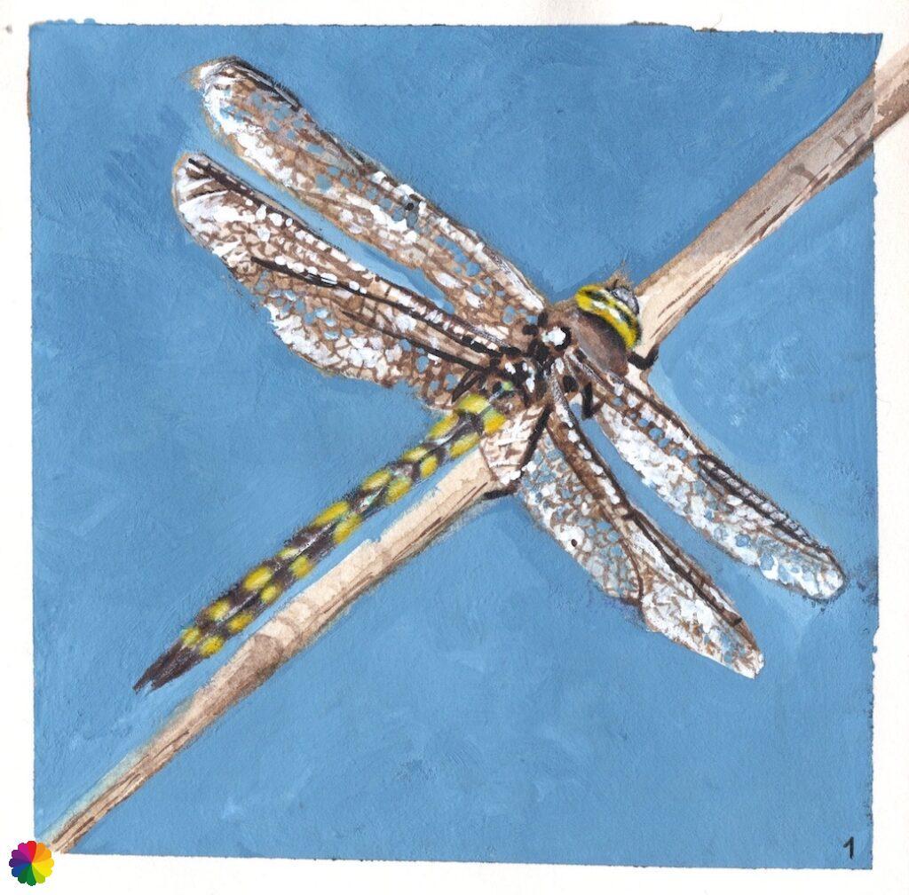 Illustratie libelle