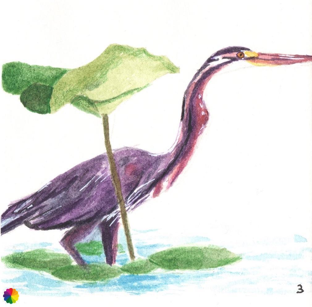 illustration-purple-heron