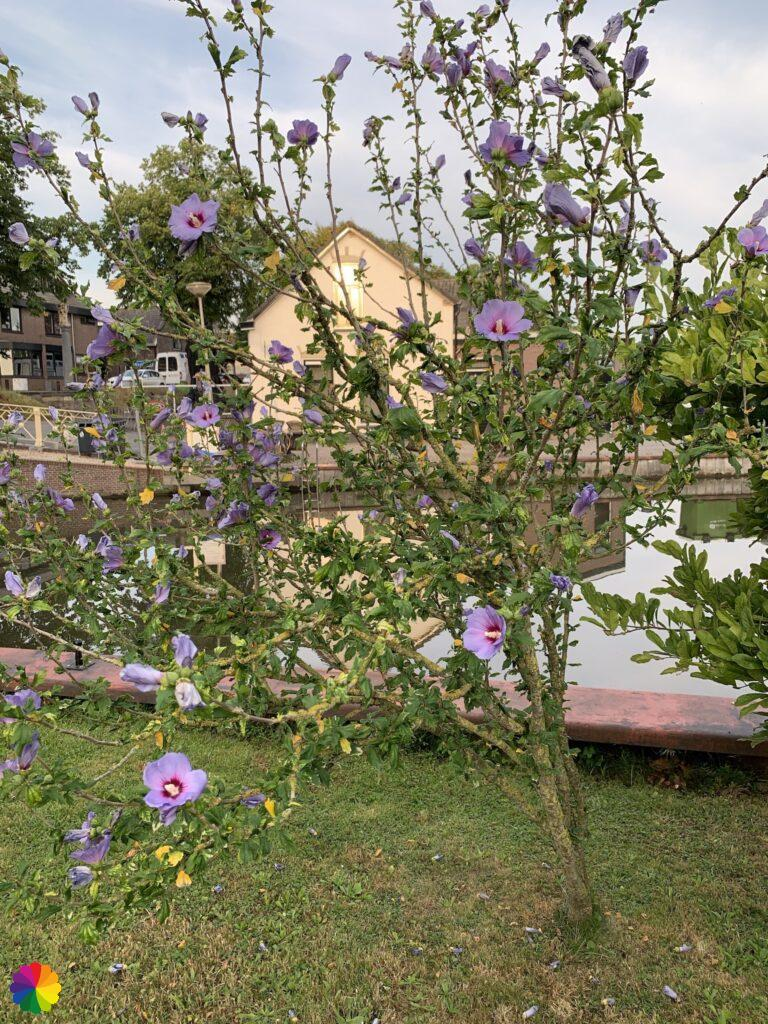 Beautiful tree in bloom