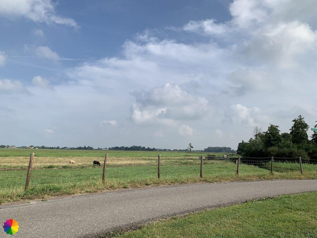 View from the bench at Maasland