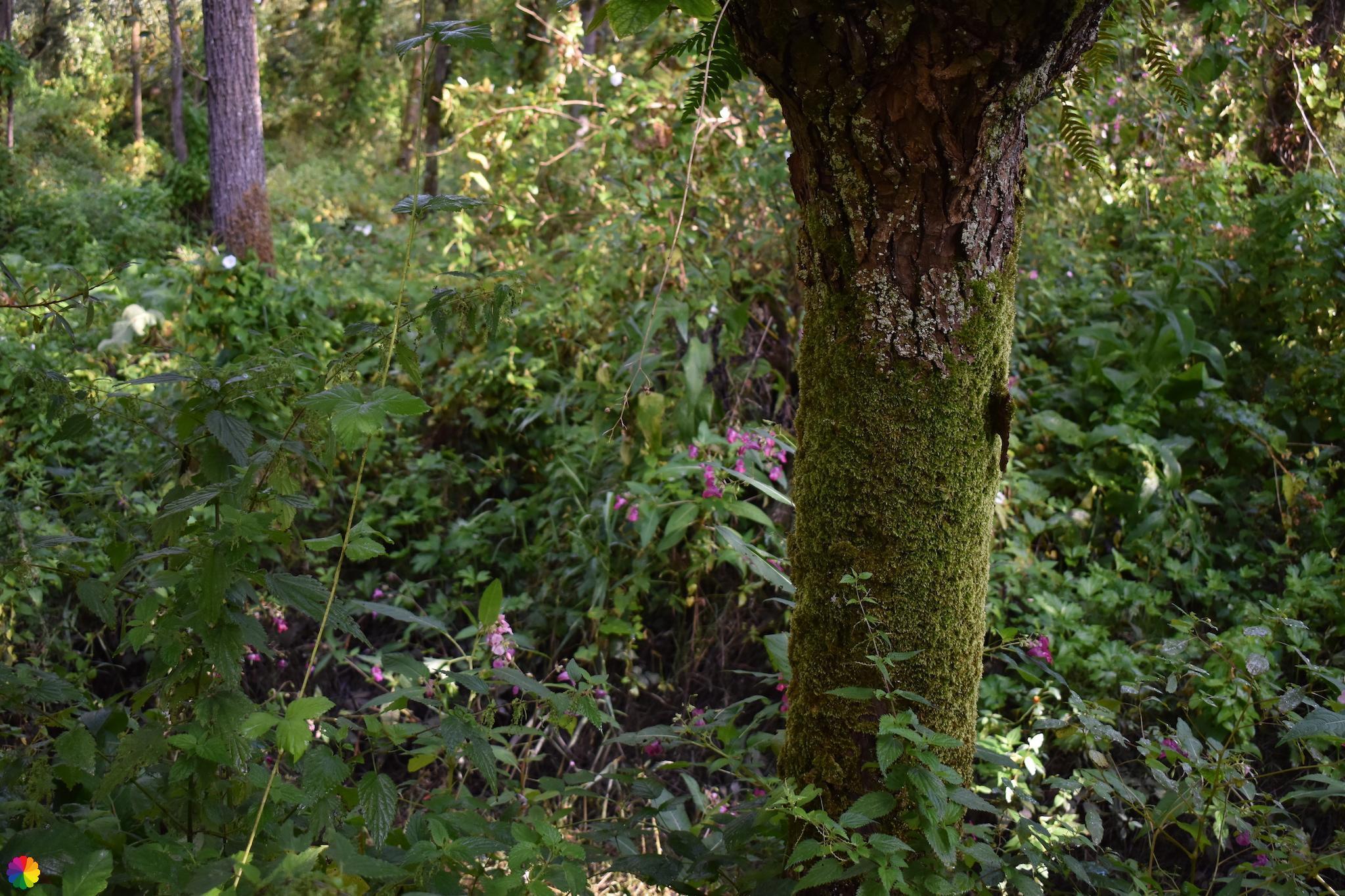 Bomen en planten Klein Profijt