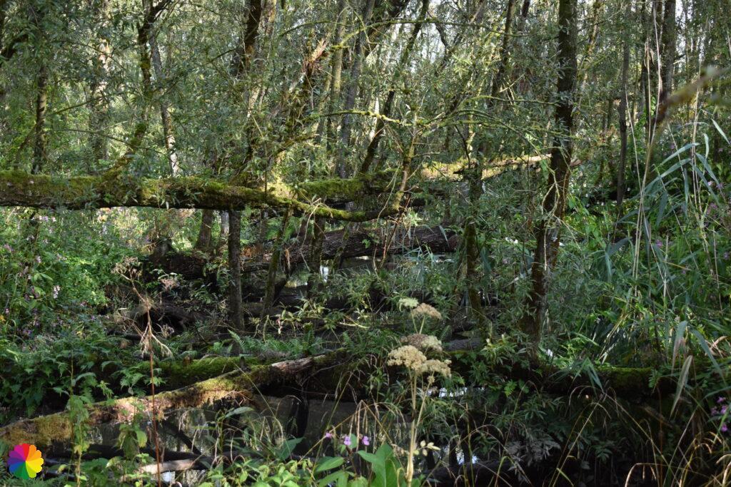 Omgevallen bomen Klein Profijt