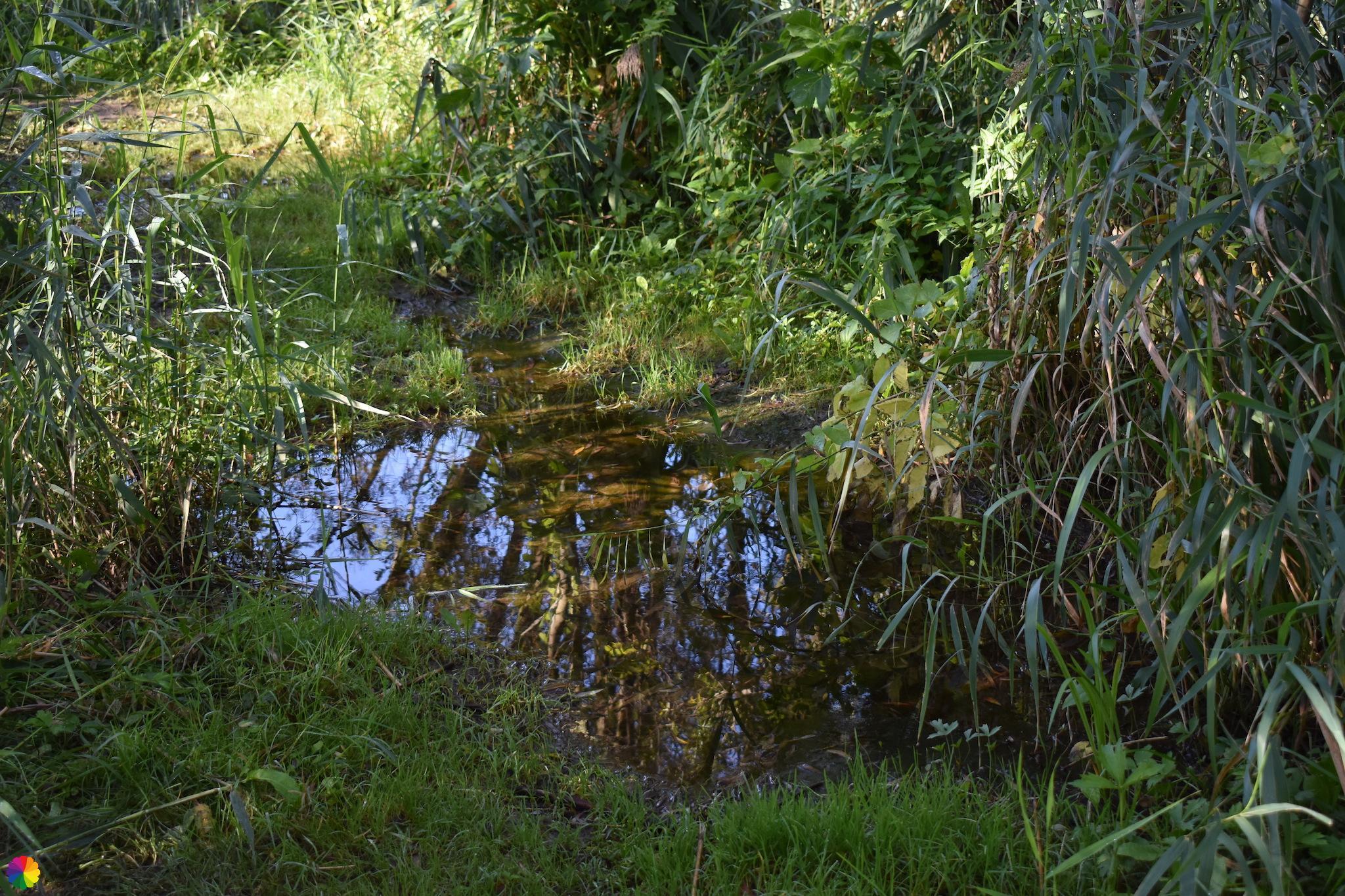 Waterplas Klein Profijt