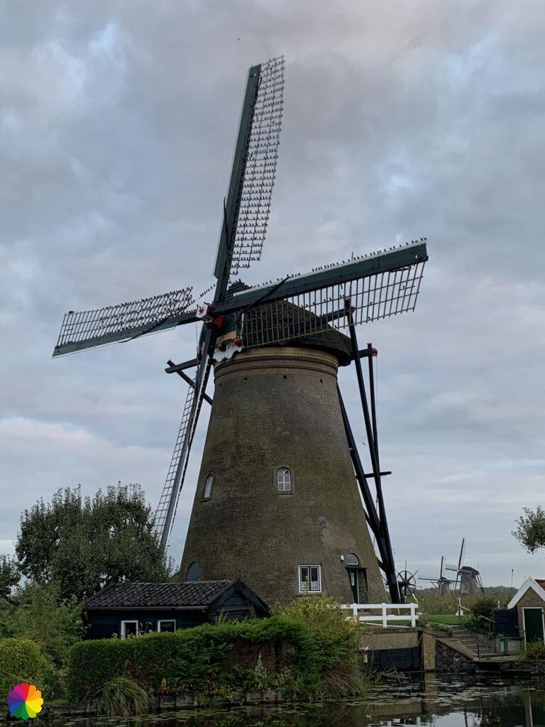 Windmill with a flock of starlings at Kinderdijk
