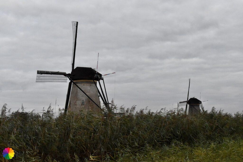 Windmills at Kinderdijk 3