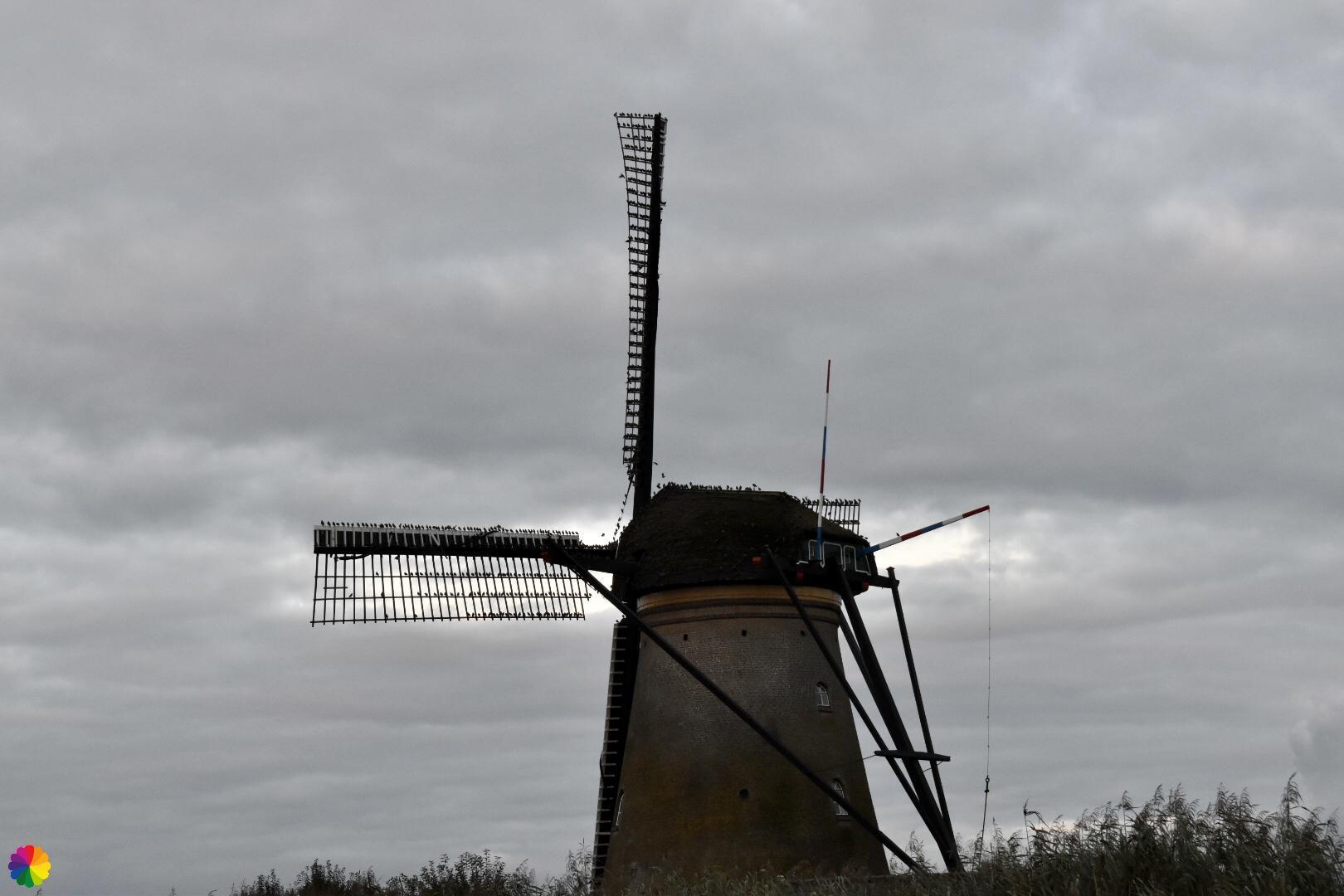 Kinderdijk molen 9