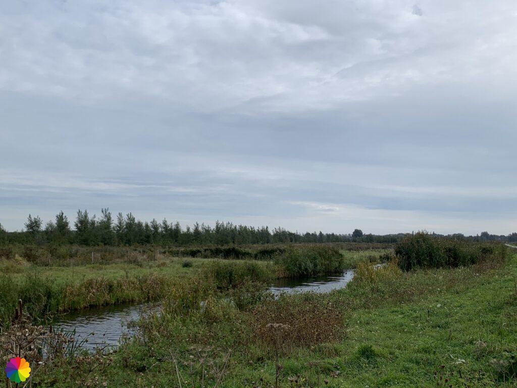 Waalbos near Rijsoord