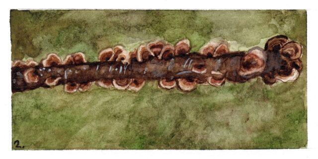 Illustratie stronk met elfenbankjes