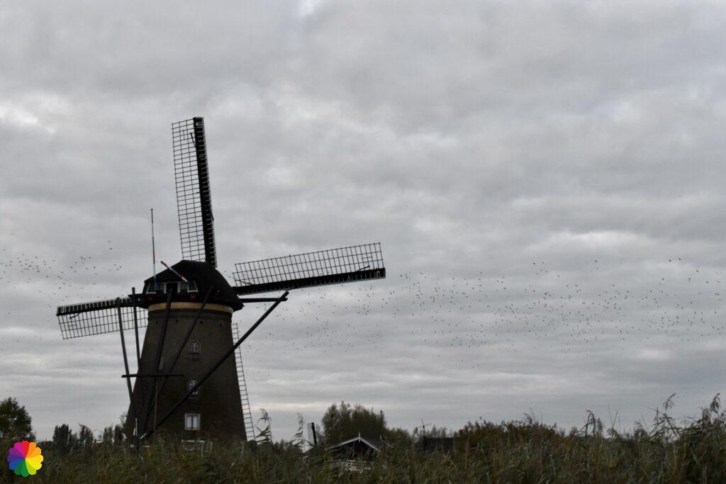 Windmill at Kinderdijk 5