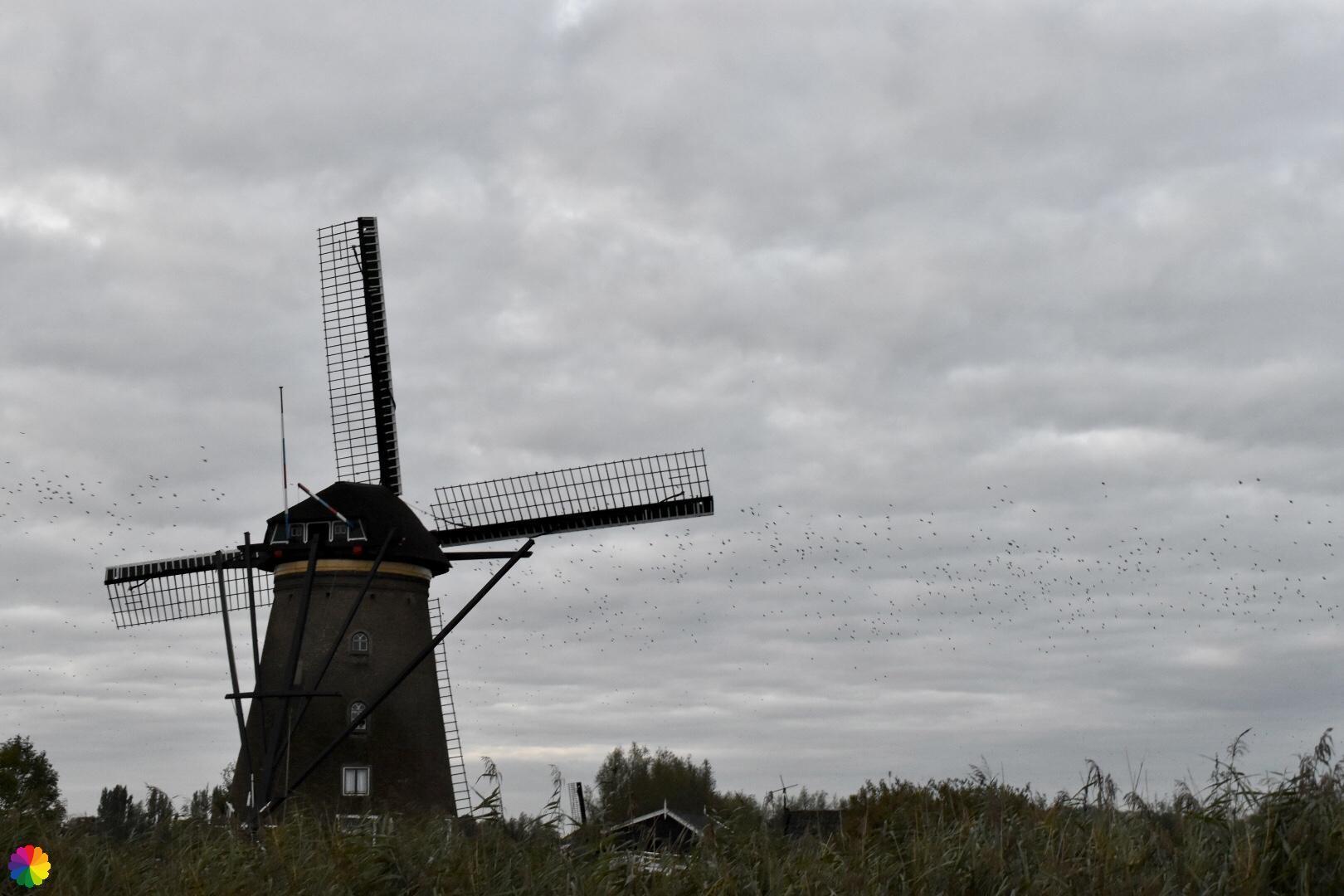 Kinderdijk molen 5