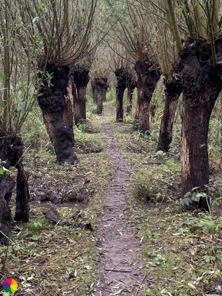 Path through the Ridderkerkse Griend
