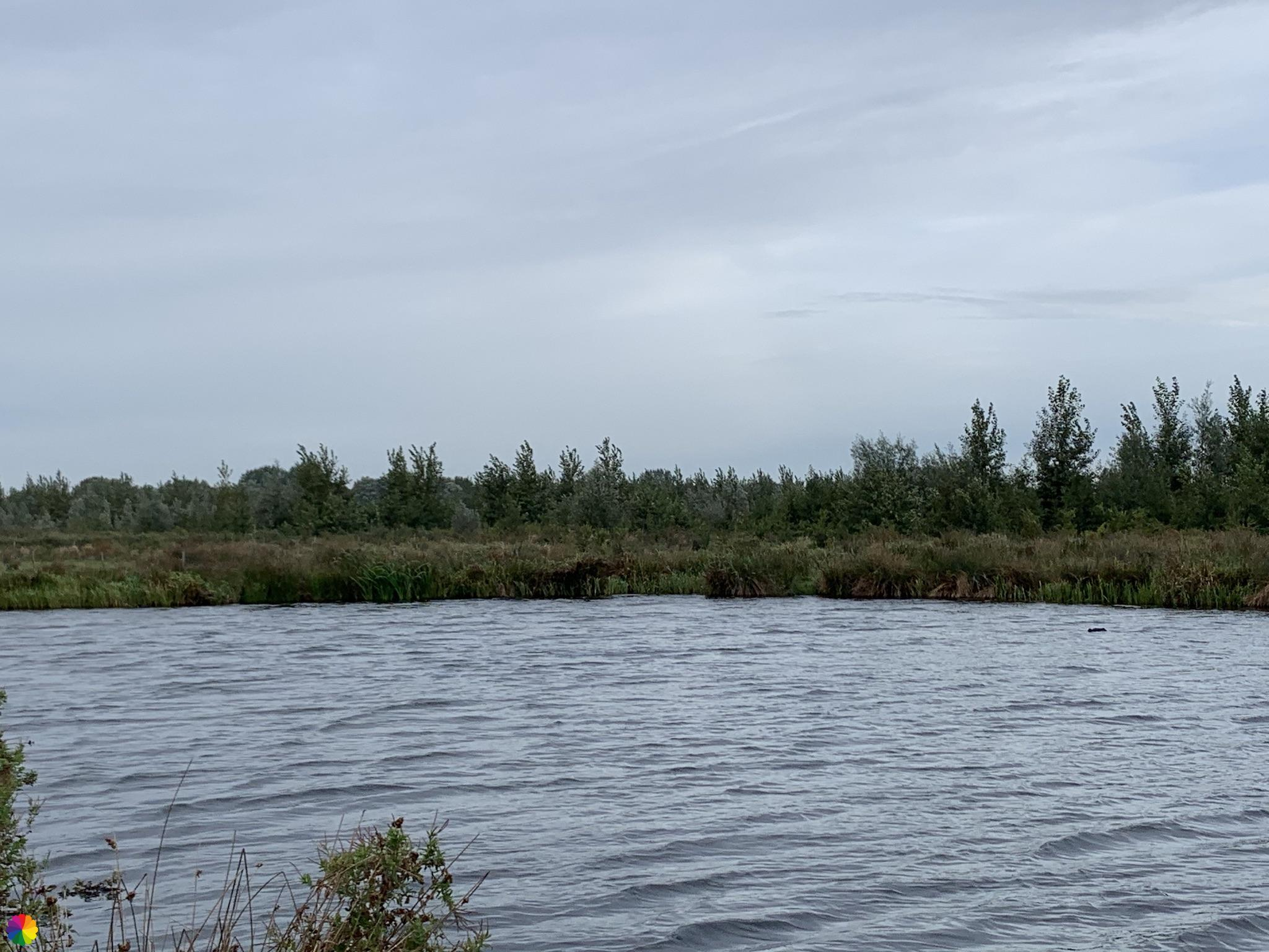 Plas in het Waalbos