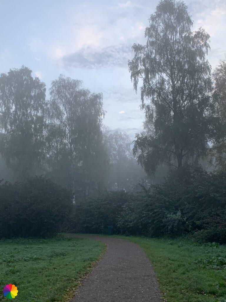 Misty in the Loet woodlands