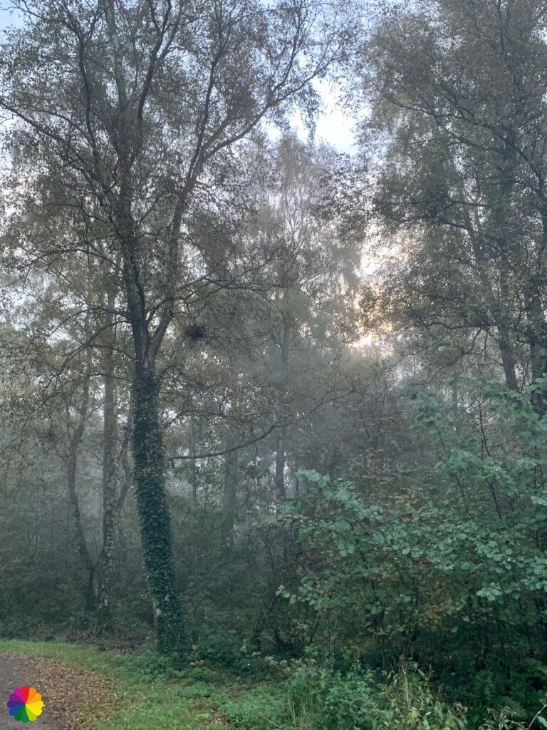 The sun breaks through in the Loet woodlands