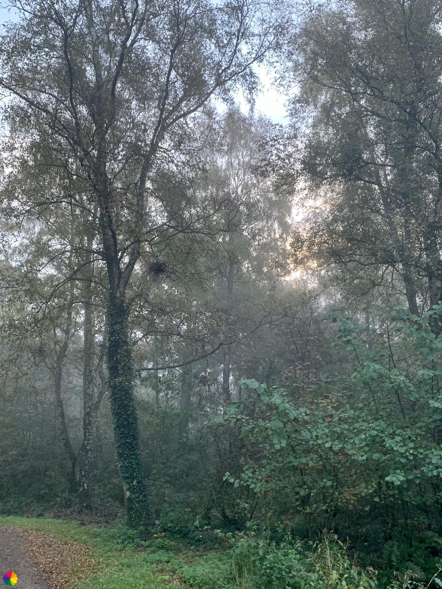 De zon breekt door in het Loetbos