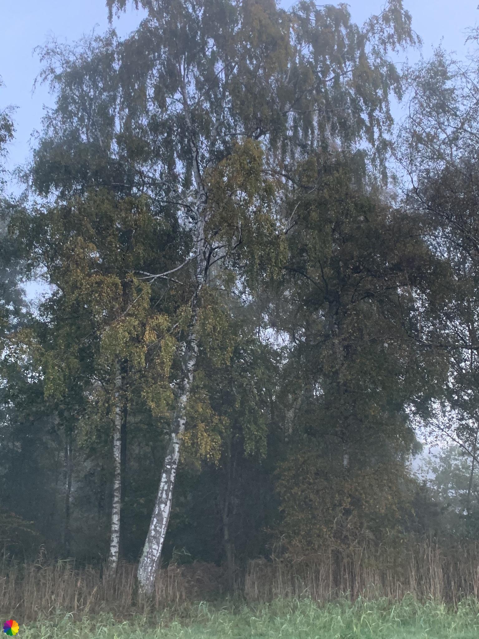 Bomen in het Loetbos