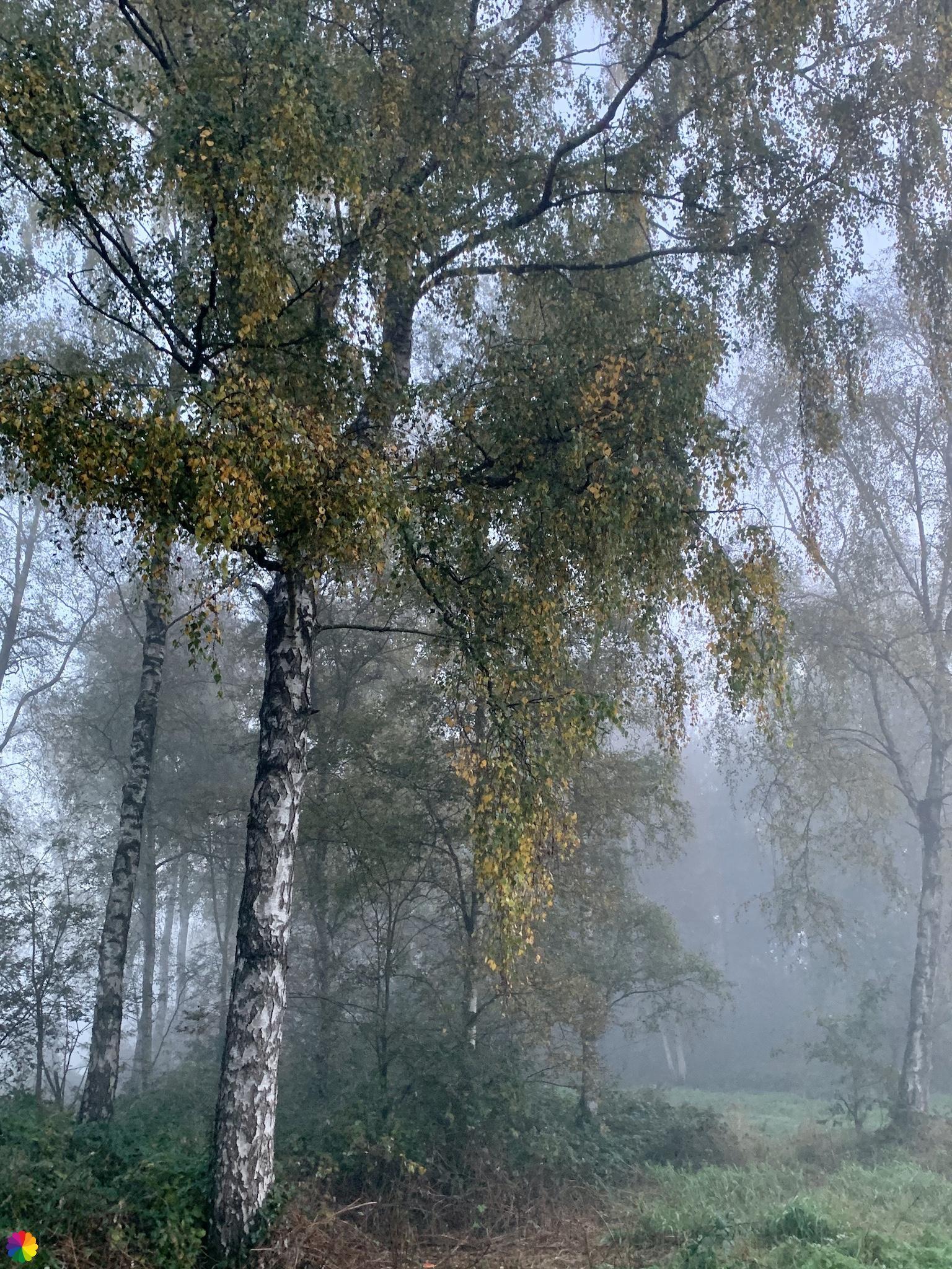 Een boom in het Loetbos