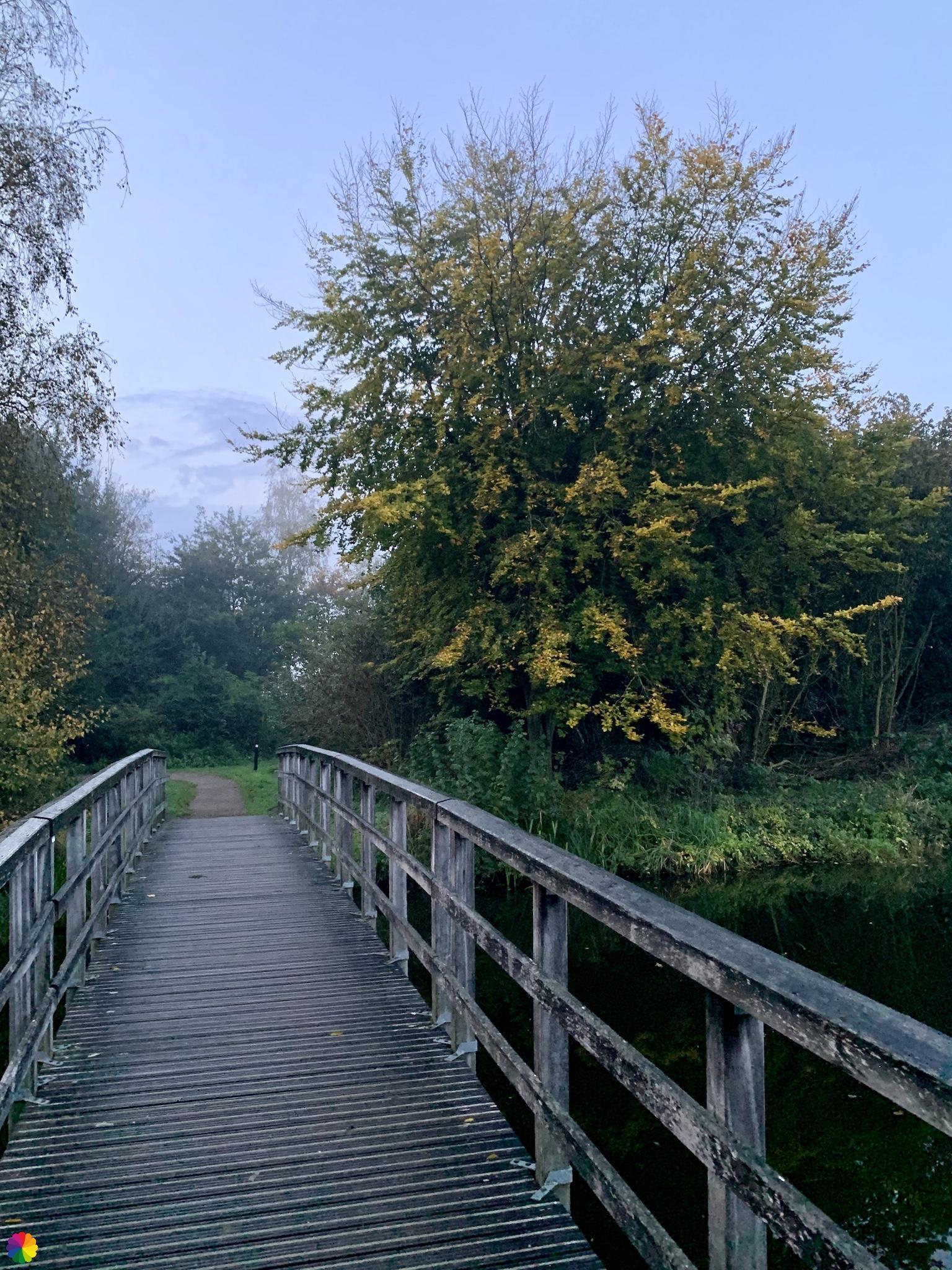Een bruggetje in het Loetbos