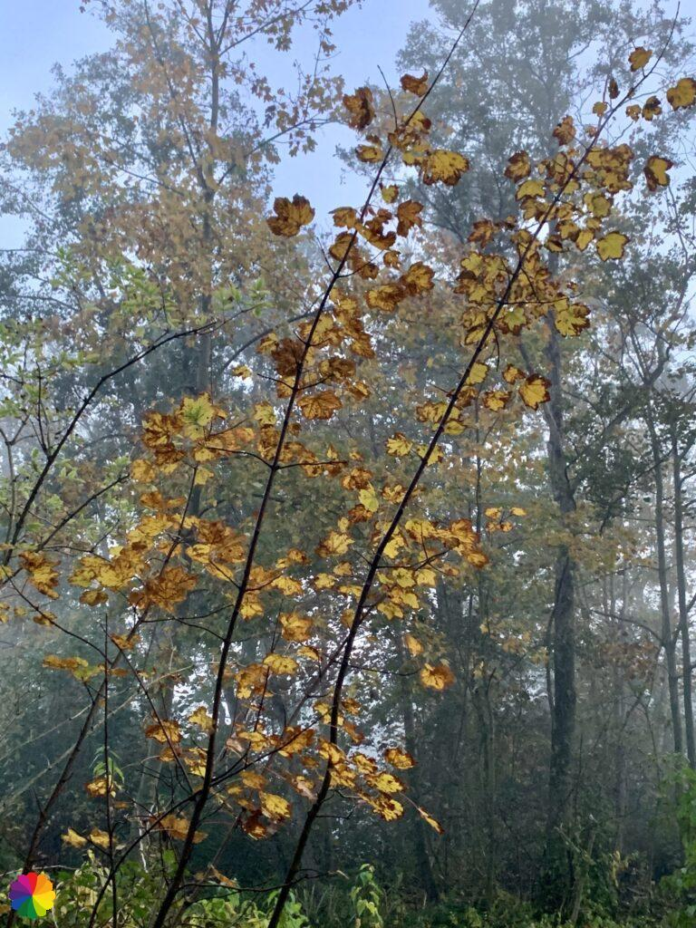 Autumn leaves in the Loet woodlands