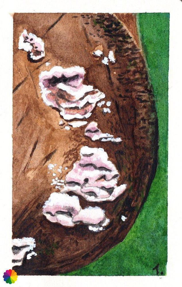 Illustratie boomstam met witte zwammen