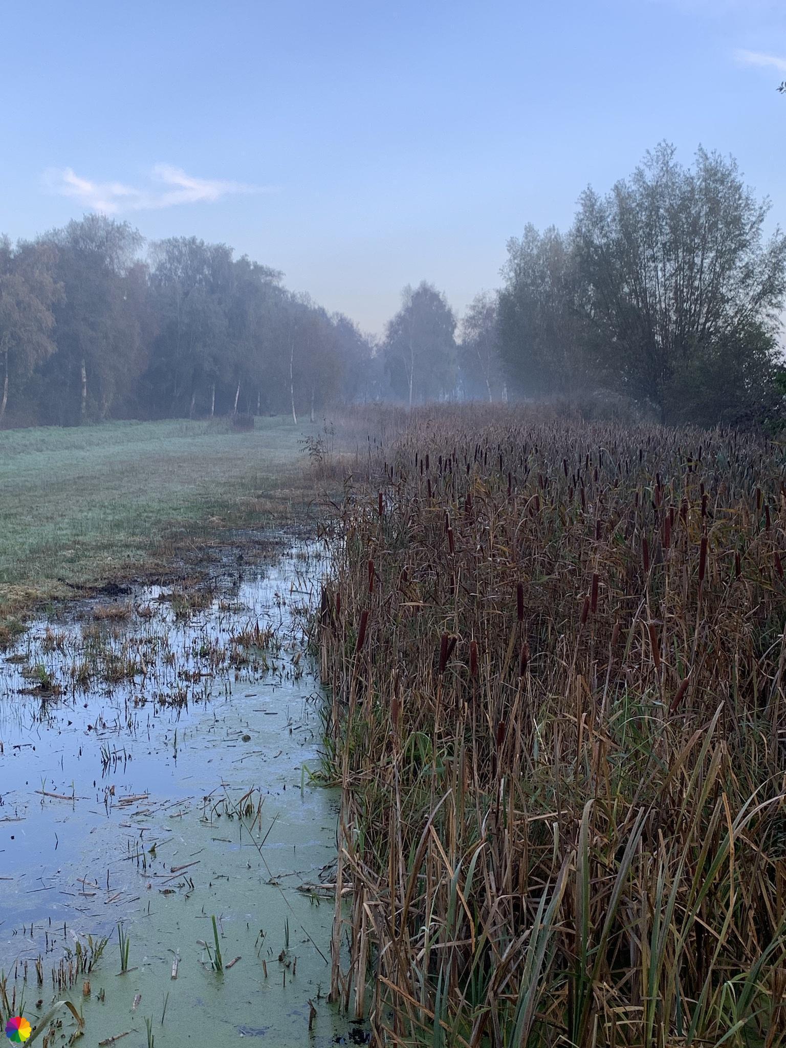 Mistig moeras in het Loetbos