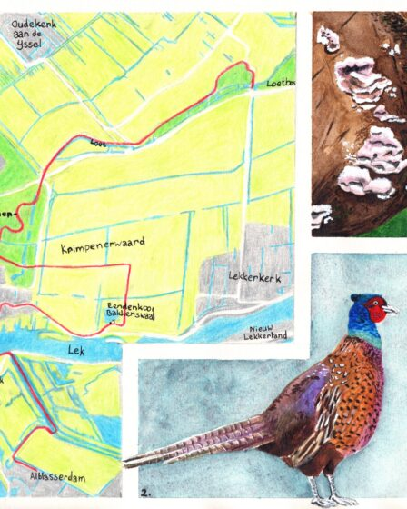 Hiking map Kinderdijk - Loetbos