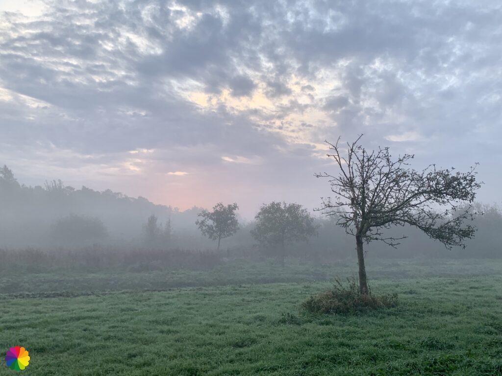 Sunrise in the Loet woodlands
