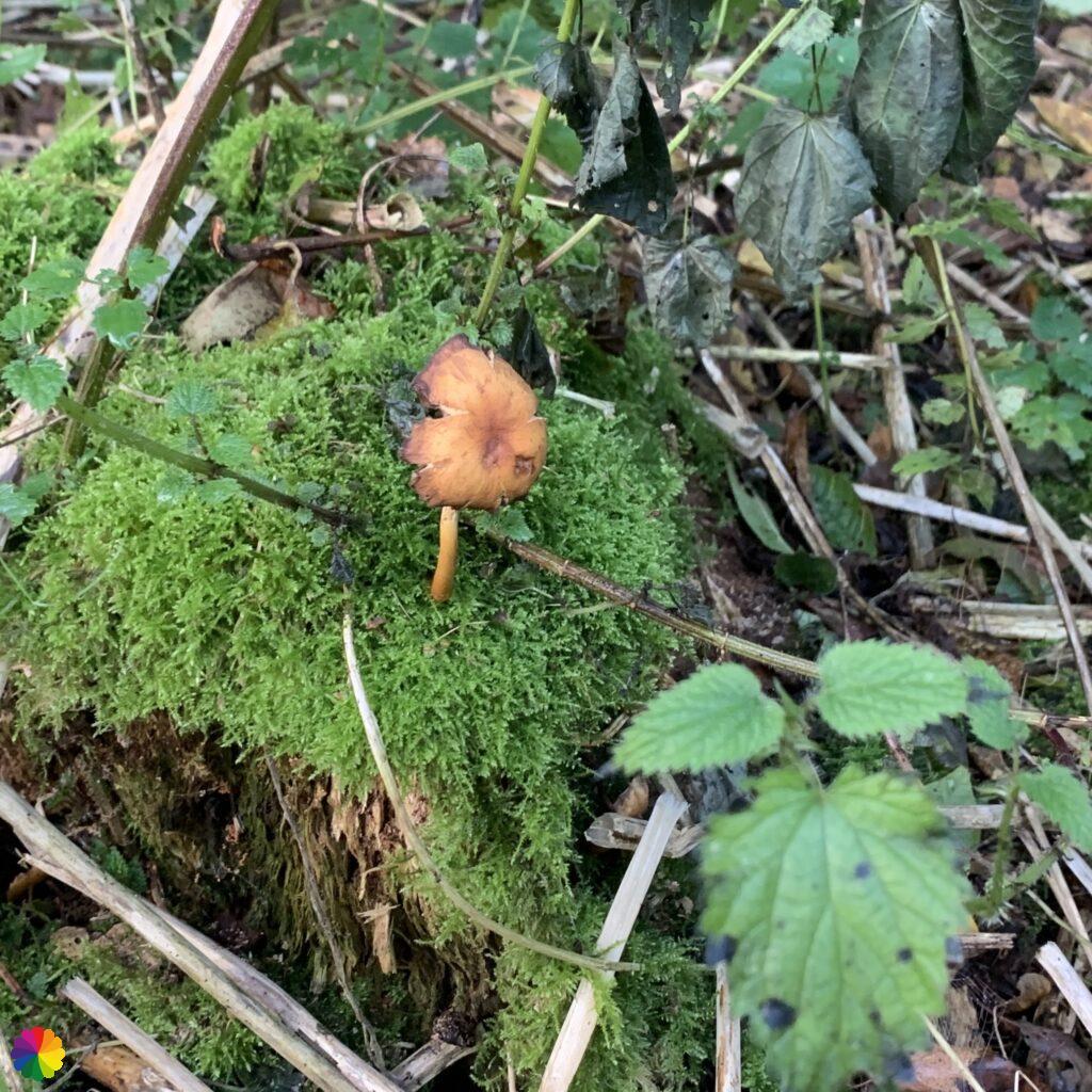 A mushroom, no idea what kind it is