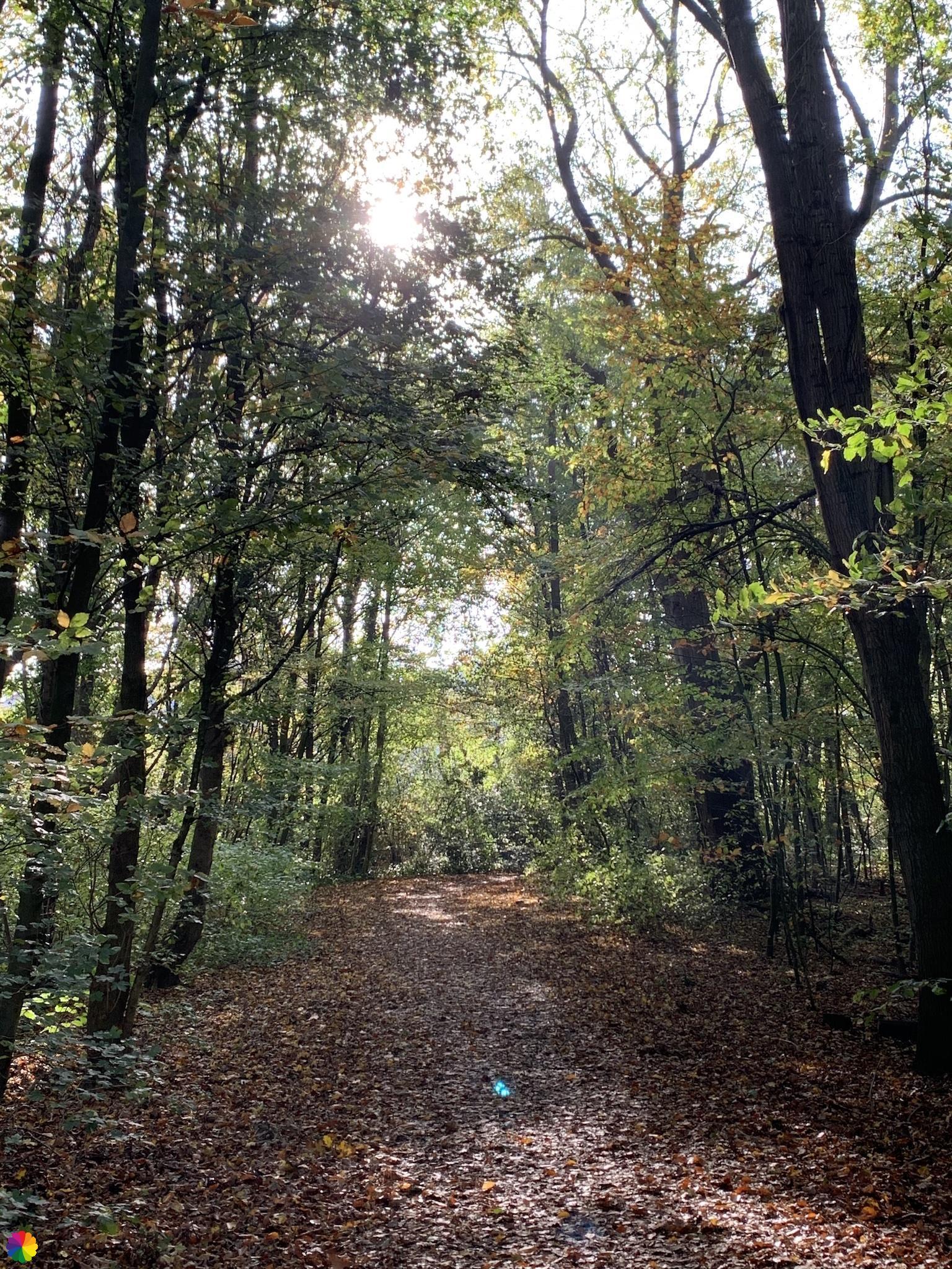 Het Molenpark in Hillegersberg
