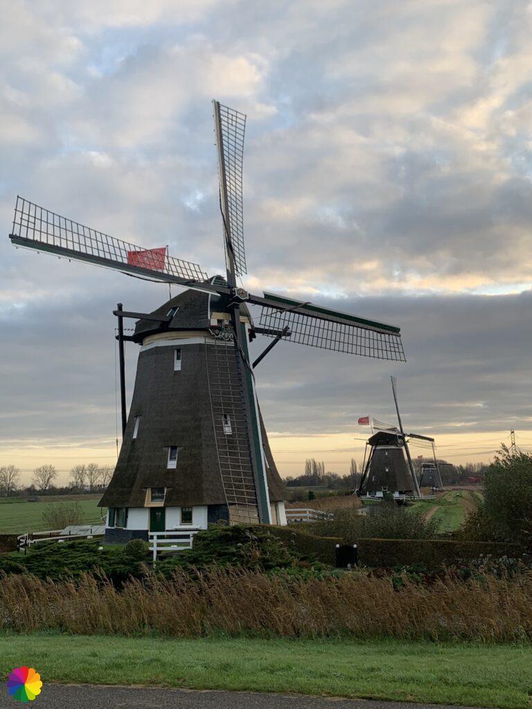 Three windmills of the windmill quadrangle at the Tweemanspolder