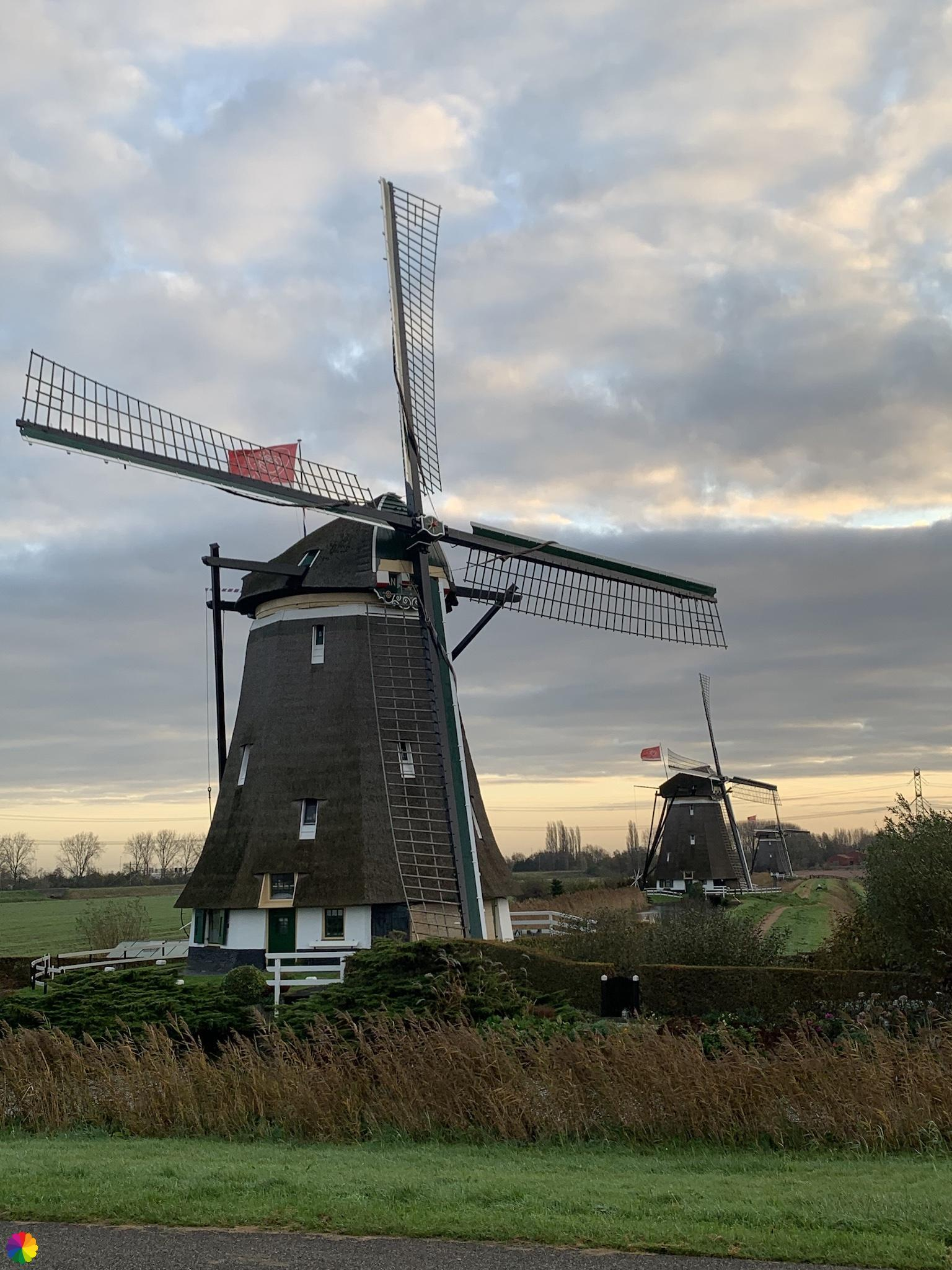 Drie molens van de molenviergang in de Tweemanspolder
