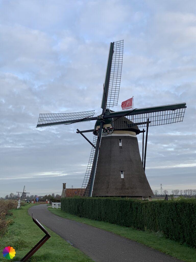 Windmill number 4 of the windmill quadrangle at the Tweemanspolder