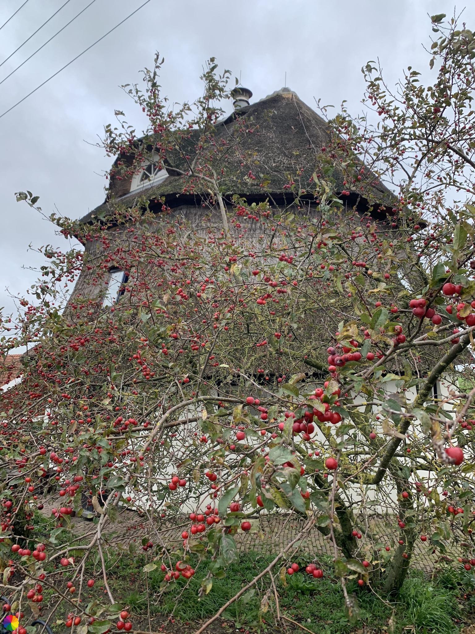 Molen-woonhuis tussen de appeltjes door