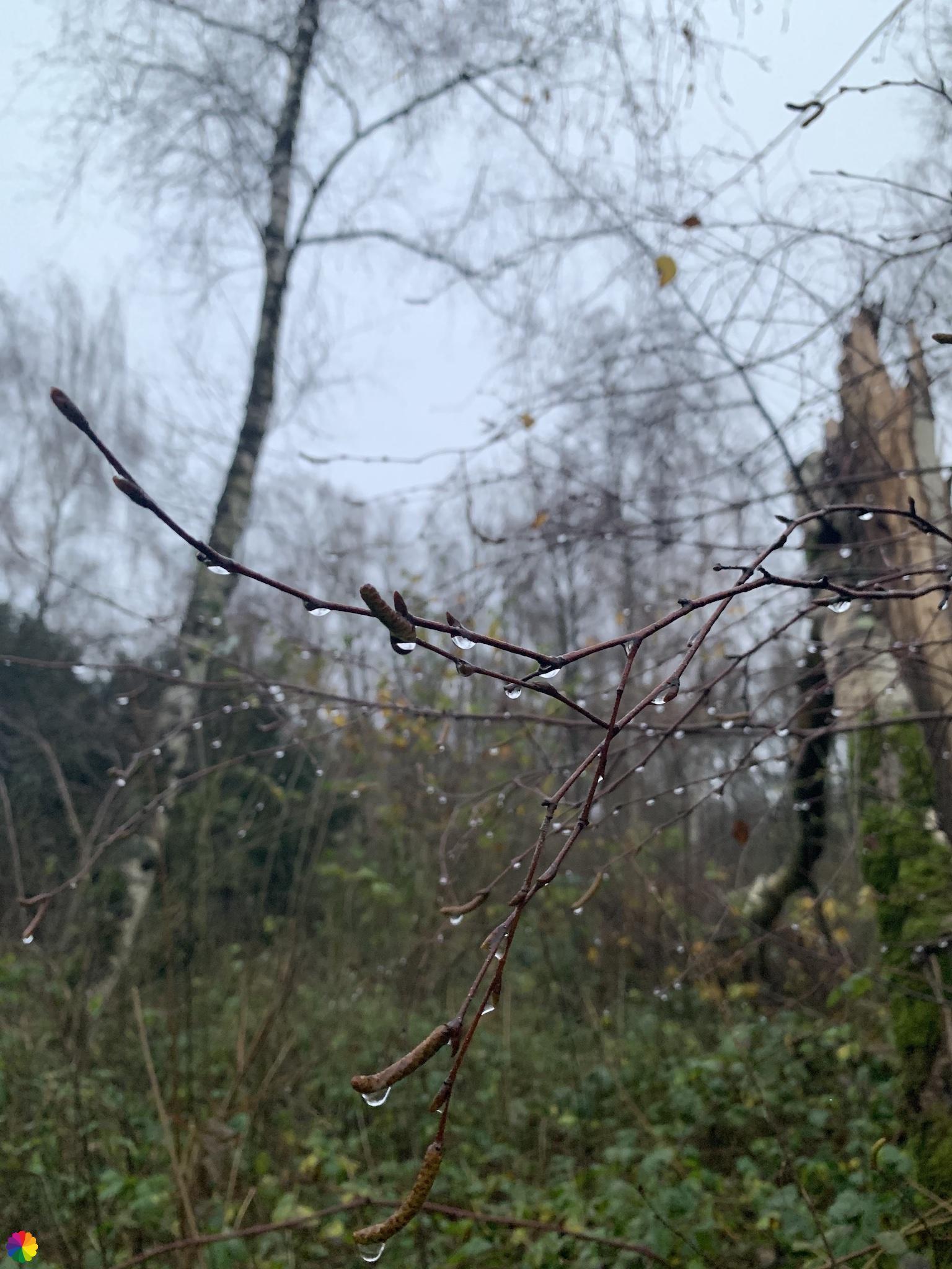 Dauwdruppels in het Loetbos