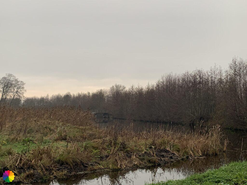 Een grauwe dag in het Loetbos
