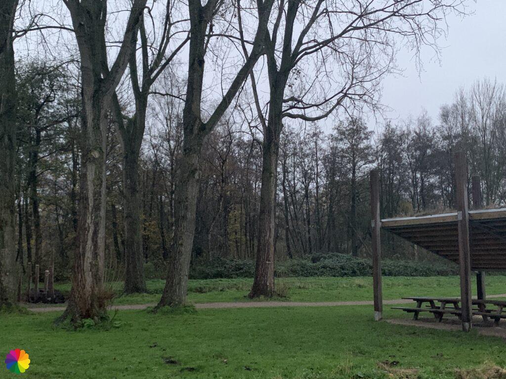 Picknickplek in het Loetbos