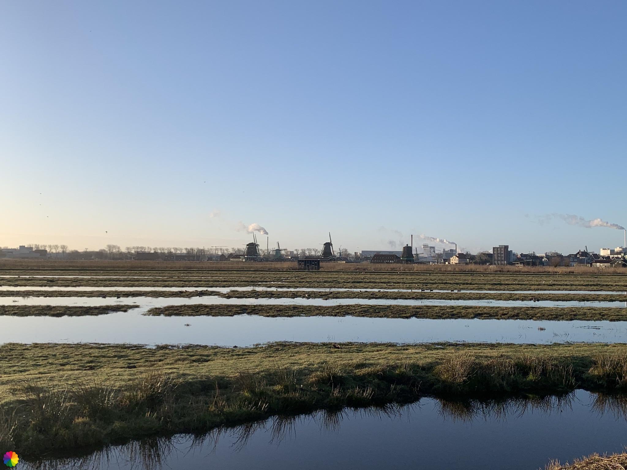 Drassig grasland ten noorden van Zaanse Schans