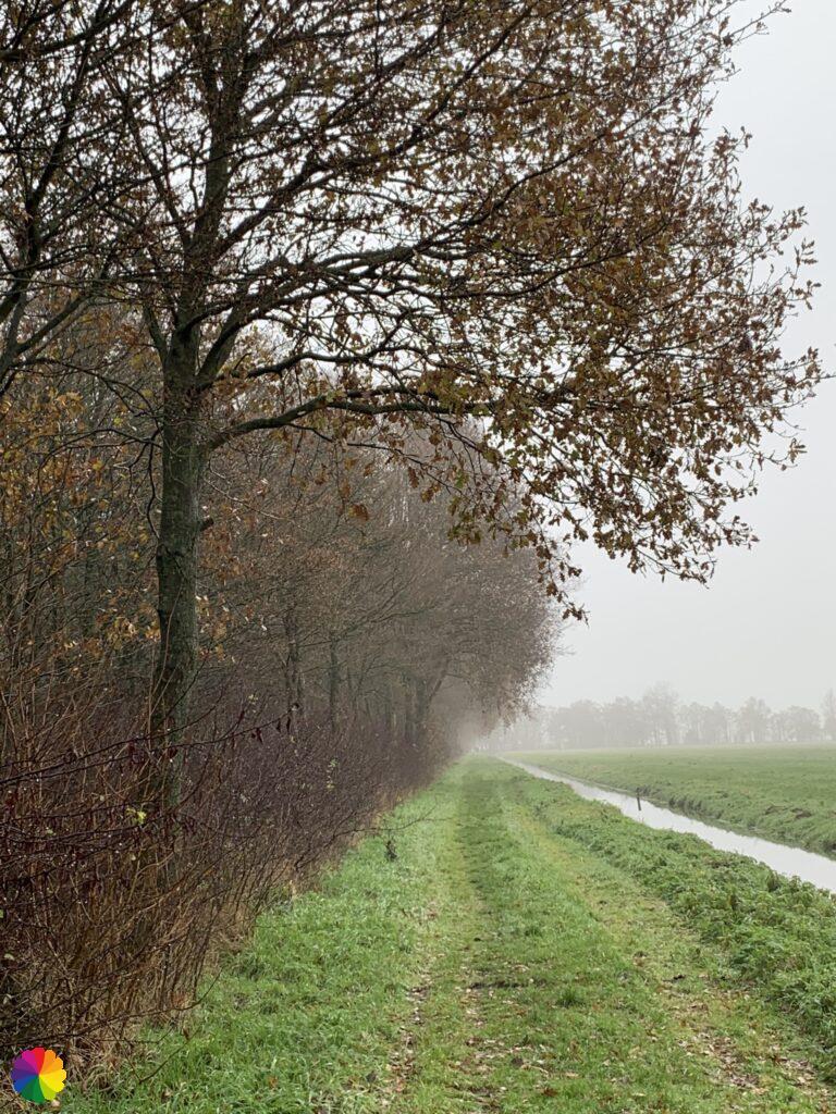Graspad langs een bos