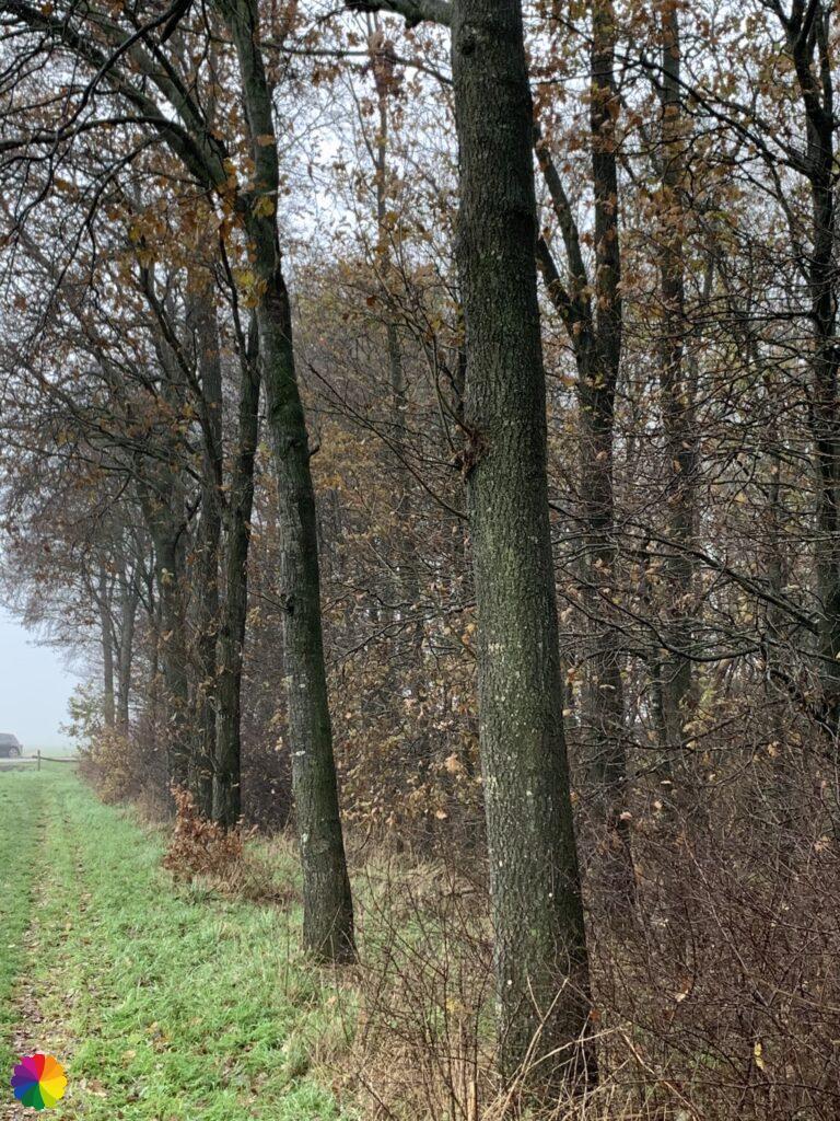 Graspad langs het bos