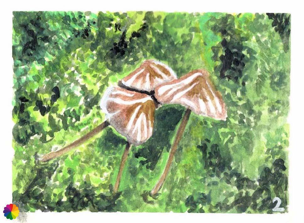Illustratie paddenstoelen
