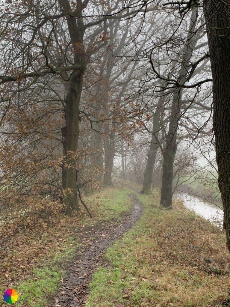 Onverhard pad tussen de bomen