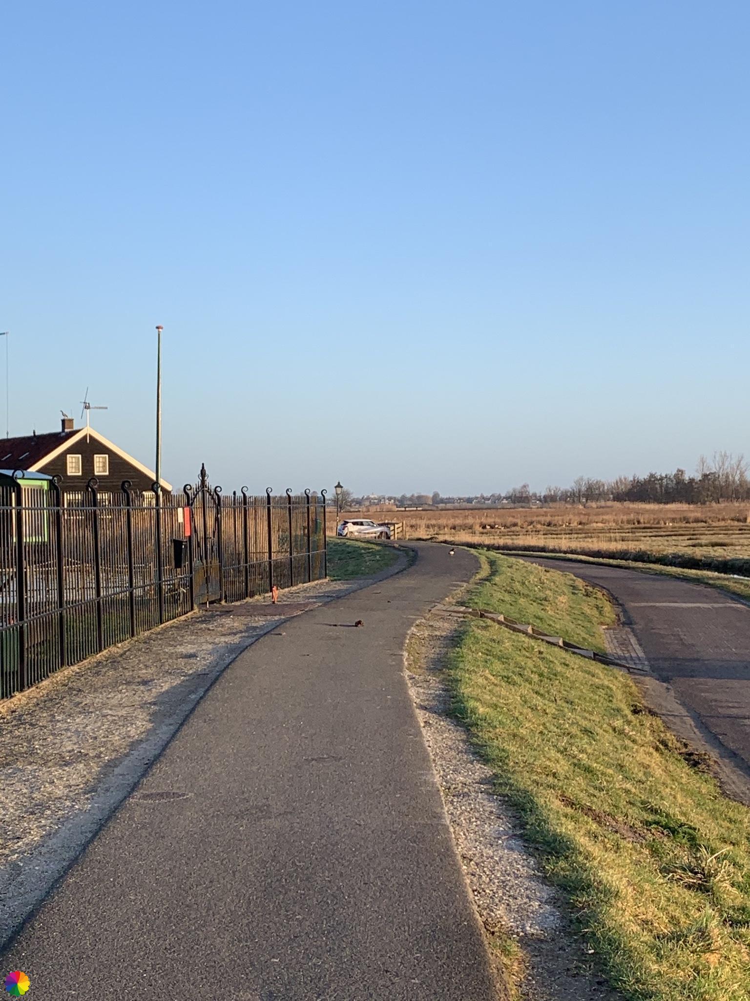 Scholekster op het pad bij de Zaanse Schans