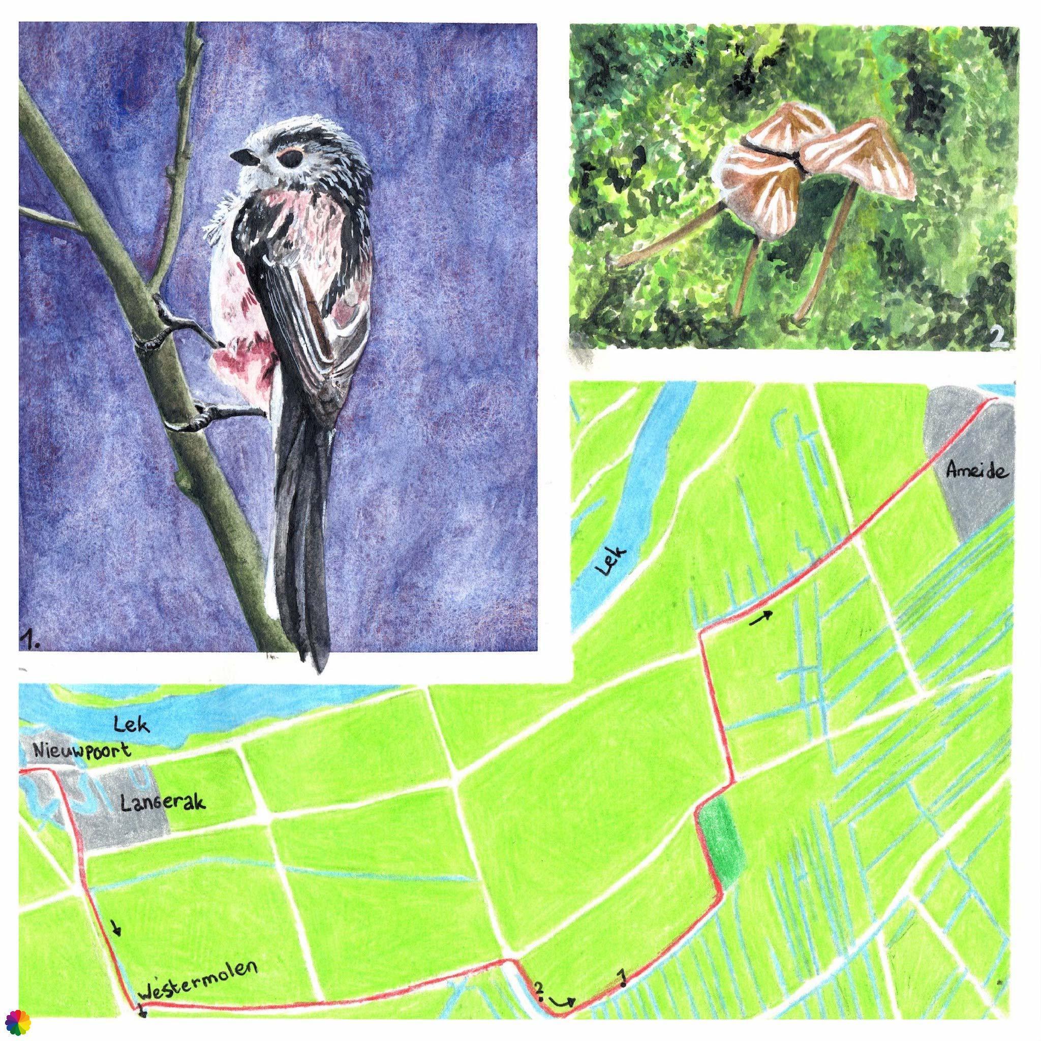 Wandelkaartje Grote rivierenpad Nieuwpoort - Ameide